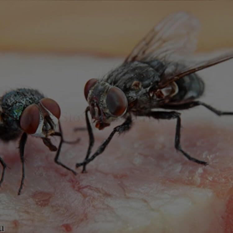 Уничтожение мух и мошек
